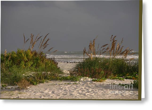 Beach Photography Greeting Cards - Morning sand dunes with seabirds 10-6-15 Greeting Card by Julianne Felton