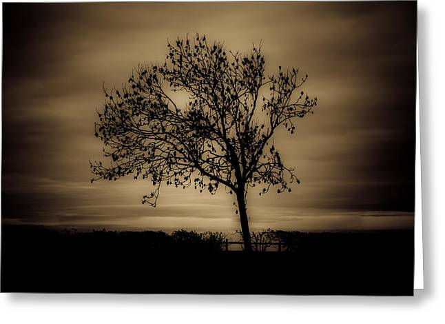 Gloomy Winter Greeting Cards - Morning silhouette Greeting Card by Chris Fletcher