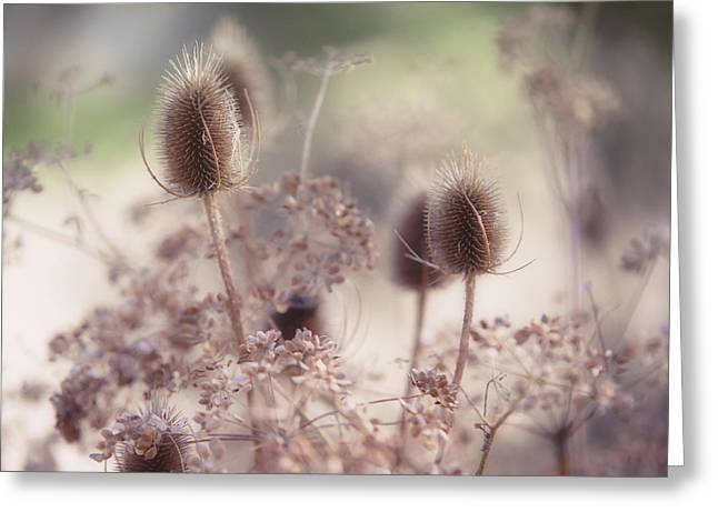 Fall Grass Greeting Cards - Morning Softness. Wild Grass Greeting Card by Jenny Rainbow