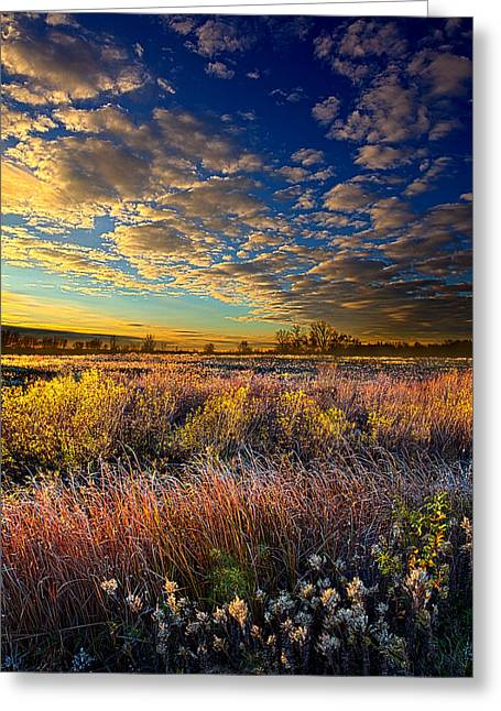 Floral Photographs Greeting Cards - Morning Splendor Greeting Card by Phil Koch