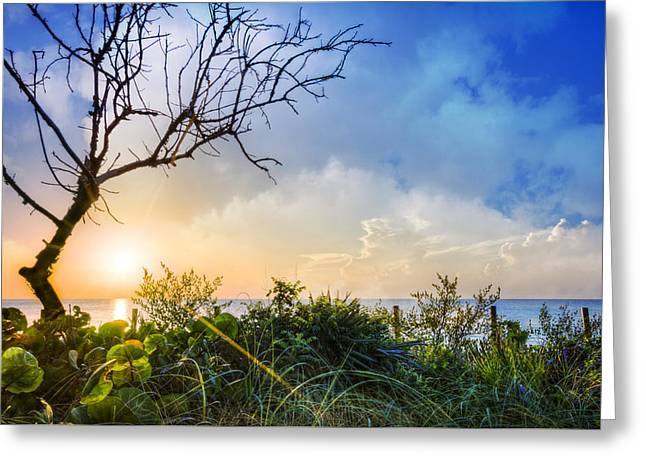 Sanddunes Greeting Cards - Morning Starshine Greeting Card by Debra and Dave Vanderlaan