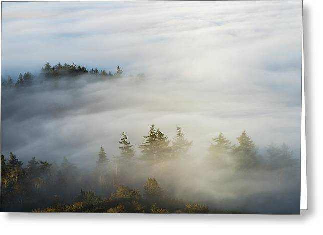 Emergence Greeting Cards - Morning Sun Lights Up The Fog  Astoria Greeting Card by Robert L. Potts