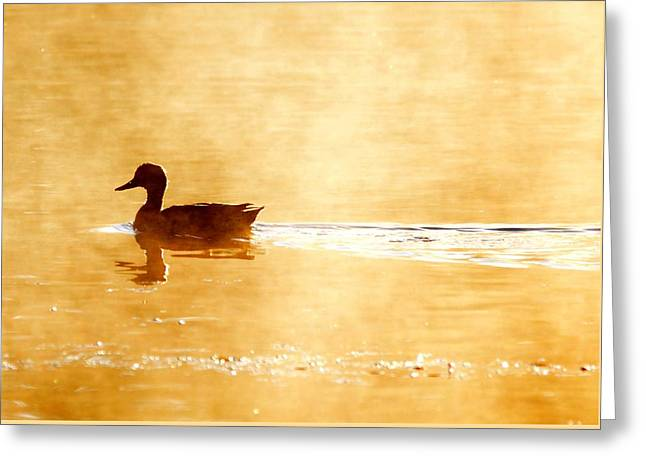 Flying Seagull Greeting Cards - Morning Swim Greeting Card by Russell Bonovitch