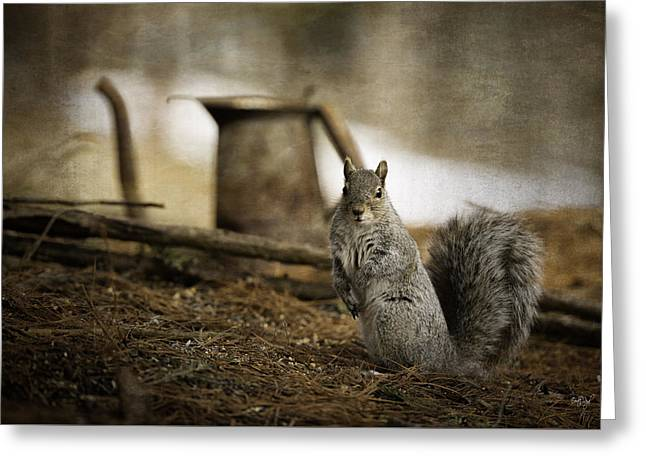 Gray Squirrel Greeting Cards - Morning Tea Greeting Card by Everet Regal