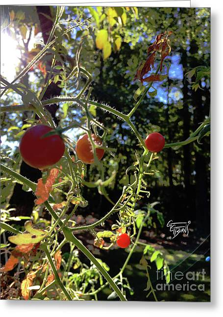 Morning Vine Ripened Tomatoes Greeting Card by GG Burns