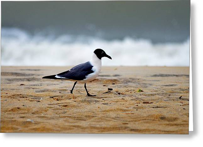 Flying Seagull Greeting Cards - Morning Walk Greeting Card by Russell Bonovitch