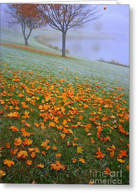 Mornings Carpet Greeting Card by Julie Lueders