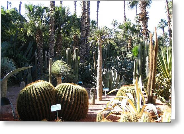 Morocco Majorelle Gardens 03 Greeting Card by Yvonne Ayoub