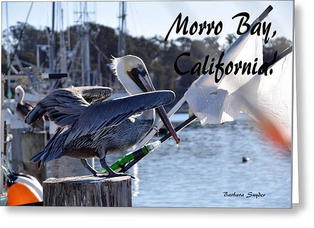 Morro Bay Harbor Pelican Ready For Take Off Greeting Card by Barbara Snyder