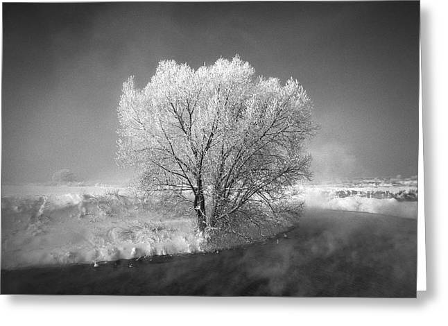 Frost Pyrography Greeting Cards - Moscow area. Winter time. Greeting Card by Andrey Ushakov