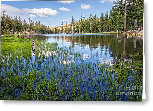Ebbetts Pass Greeting Cards - Mosquito Lake Reflections 2 Greeting Card by Dianne Phelps