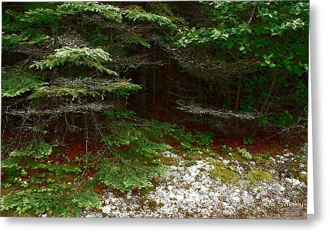Forest Floor Greeting Cards - Moss and Lichen Greeting Card by Joanne Smoley