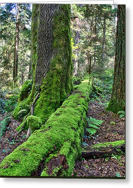 Renewing Greeting Cards - Moss and Tree Greeting Card by Josh Manwaring