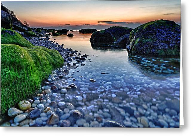 Long Island New York Greeting Cards - Moss and Water Greeting Card by Rick Berk
