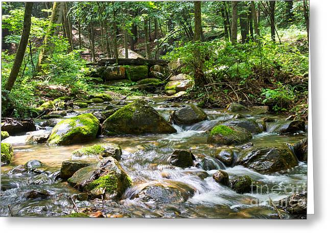 Moss Greeting Cards - Moss-Covered Forest Creek Greeting Card by DAC Photography