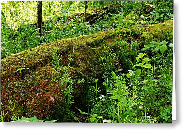 Moss-covered Greeting Cards - Moss Covered Log 2 Greeting Card by Larry Ricker