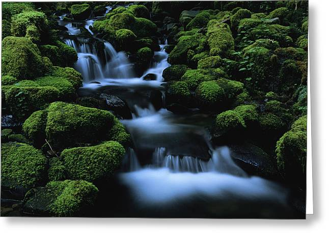 Moss Green Greeting Cards - Moss-covered Rock Surrounding Greeting Card by Melissa Farlow