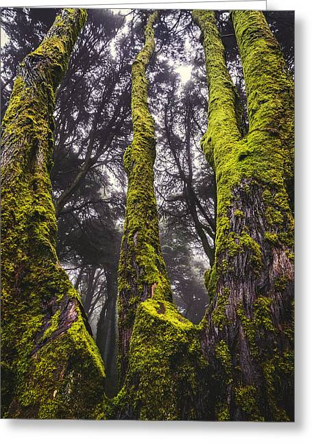 Foggy Day Greeting Cards - Moss Covered Tree Greeting Card by Marco Oliveira