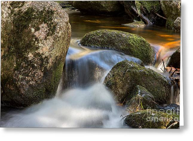 Maine Spring Greeting Cards - Moss Flow Greeting Card by Karin Pinkham