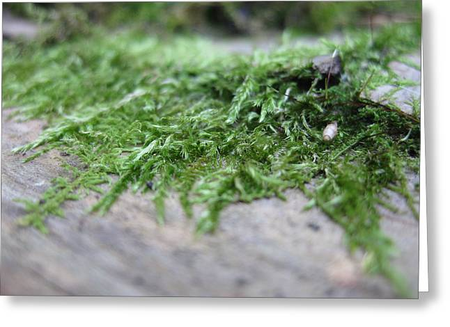 Table Greeting Cards - Moss Growing out of Table Greeting Card by Jeff Hartman
