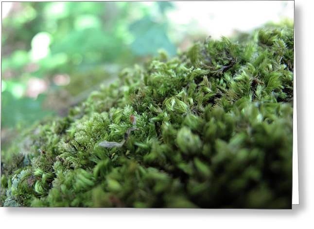 Naturalistic Greeting Cards - Moss I Greeting Card by Stefania Levi