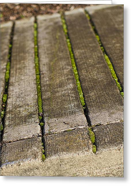 Moss Photographs Greeting Cards - Moss Lines Greeting Card by Rebecca Cozart