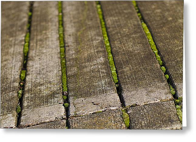 Moss Lines Greeting Card by Rebecca Cozart