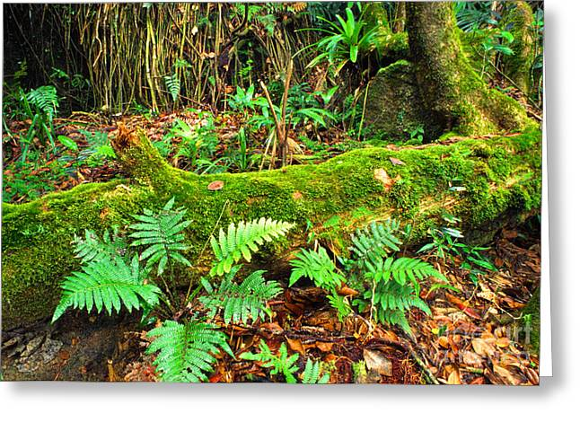 Yunque Greeting Cards - Moss on Fallen Tree and Ferns Greeting Card by Thomas R Fletcher