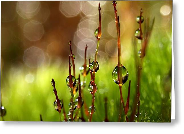 Moss Green Greeting Cards - Moss Sparkles Greeting Card by Sharon Johnstone
