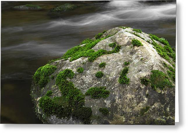 Moss Green Greeting Cards - Mossy Boulder in Mountain Stream Greeting Card by John Stephens