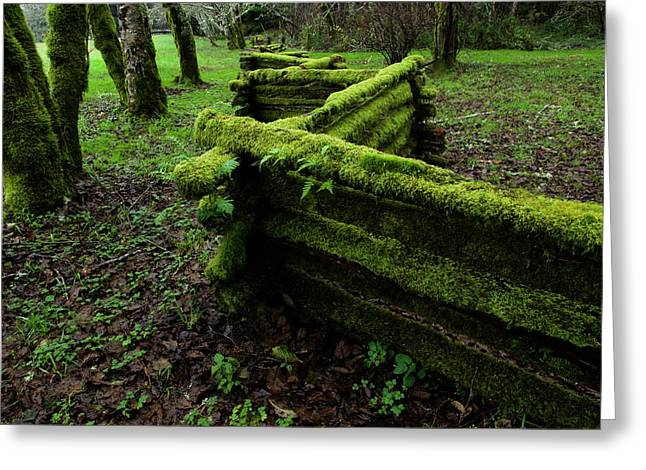 Mossy Fence 5 Greeting Card by Bob Christopher