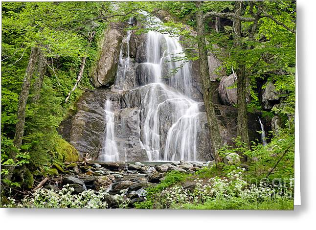 Wild And Scenic Greeting Cards - Mossy Glen Greeting Card by Susan Cole Kelly