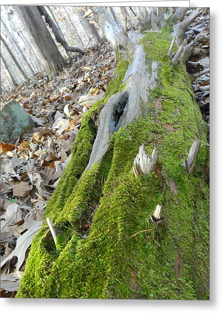 Moss Greeting Cards - Mossy log Greeting Card by Desiree Martinez