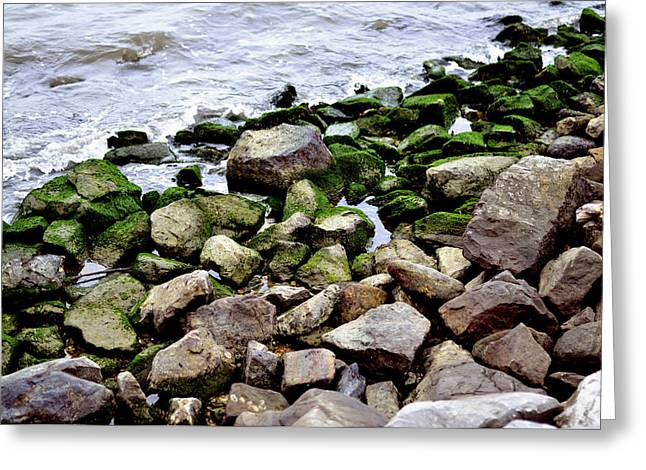 Moss Greeting Cards - Mossy Rocks Greeting Card by Glenda Ward