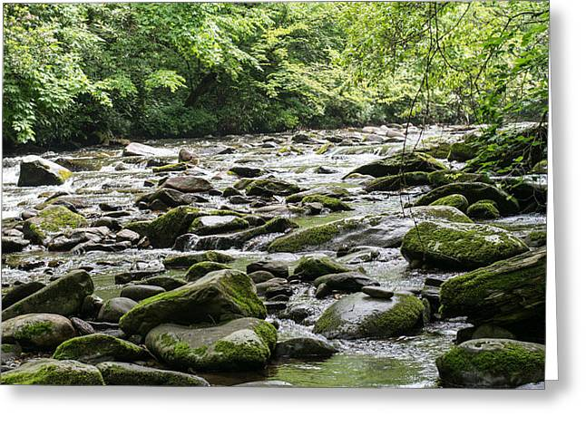 Tennessee River Greeting Cards - Mossy Rocks Greeting Card by Rebecca Carroll