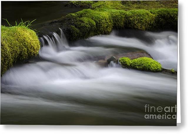 Beautiful Creek Greeting Cards - Mossy Rocks  Oregon 1 Greeting Card by Bob Christopher