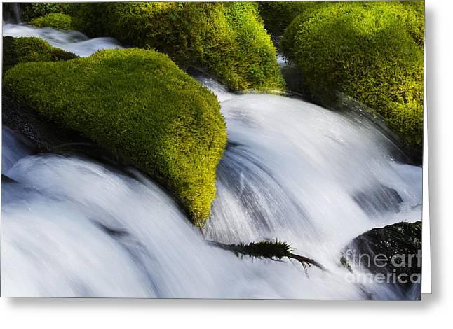 Beautiful Creek Greeting Cards - Mossy Rocks Oregon 2 Greeting Card by Bob Christopher