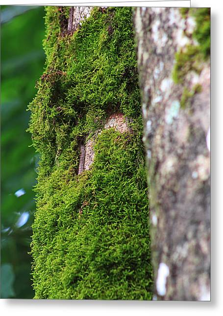 Wall Greeting Cards - Mossy Tree Greeting Card by Lynn L