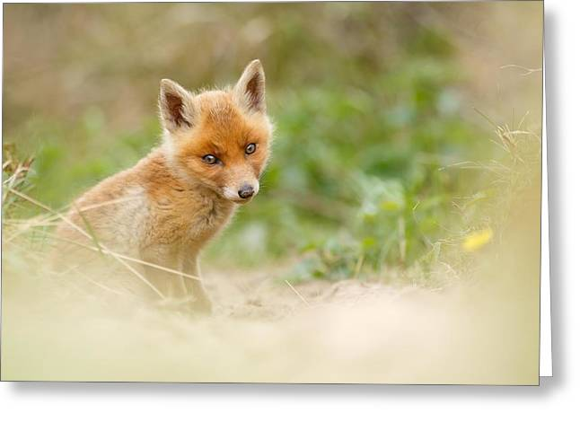 Most Beautiful Red Fox Kit In The World Greeting Card by Roeselien Raimond