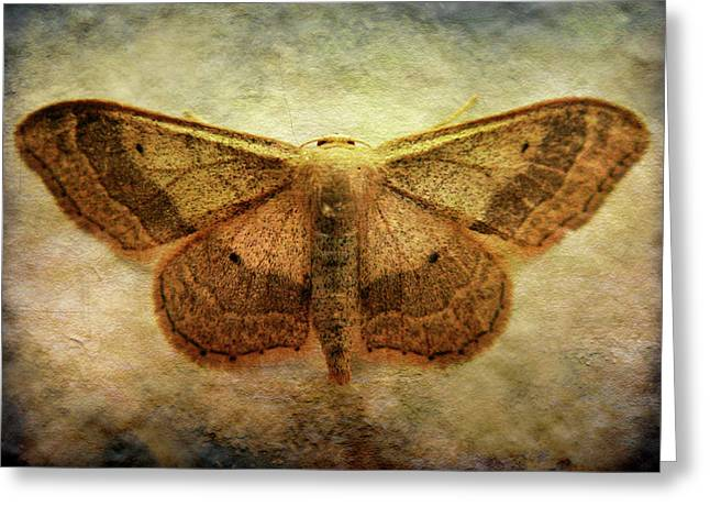 Roberto Alamino Greeting Cards - Moth Greeting Card by Roberto Alamino