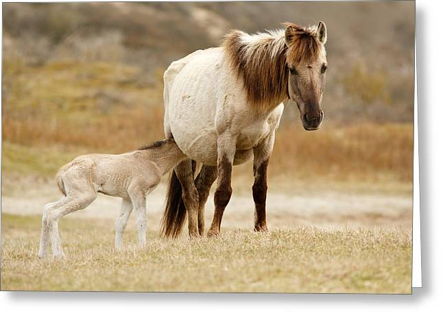 Mother And Baby Horse Greeting Card by Roeselien Raimond