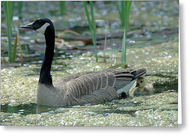 Mother Goose Greeting Cards - Mother and Child Greeting Card by Tim Elliott