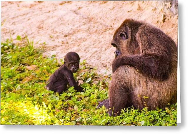 Caring Mother Greeting Cards - Mother and Infant Gorilla Greeting Card by Sarah  Kish