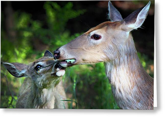 Mother Deer With Fawn Greeting Card by Codee Hart