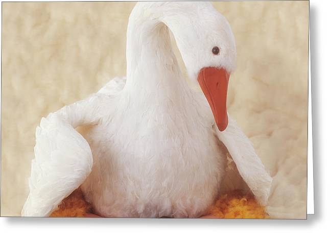 Mother Goose Greeting Card by Anne Geddes