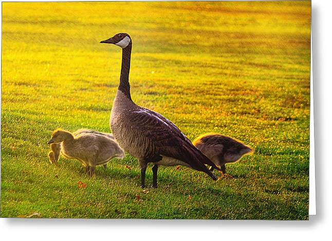 Mother Goose Greeting Cards - Mother Goose color Greeting Card by Camille Lopez