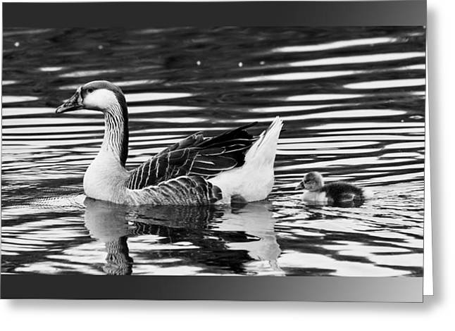 Mother Goose Greeting Cards - Mother Goose Greeting Card by K Powers  Photography