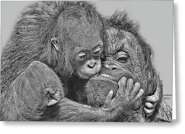 Ape Digital Greeting Cards - Mother Love Greeting Card by Larry Linton