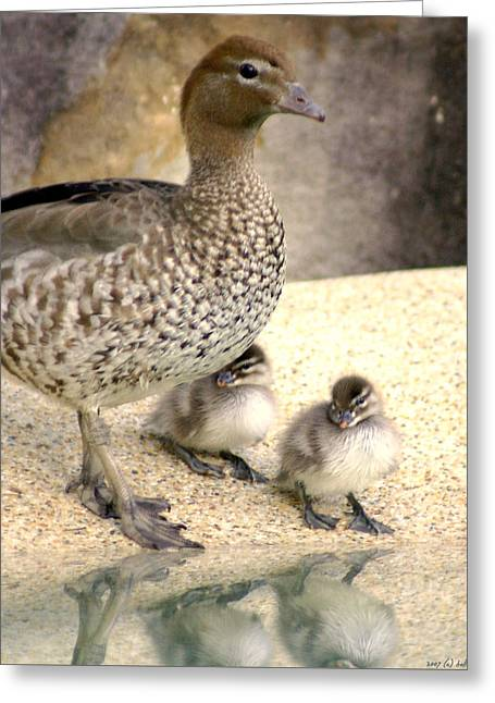 Ducklings Greeting Cards - Mother of Twins Greeting Card by Holly Kempe