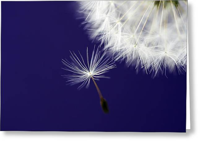 Dandelions Greeting Cards - Mother Ship Greeting Card by Rebecca Cozart